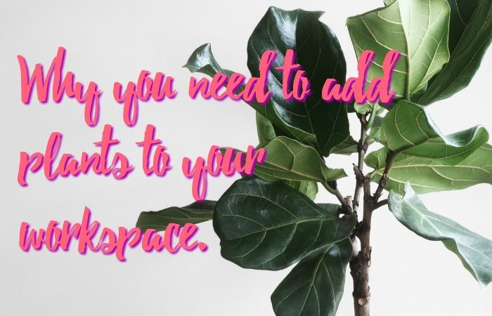 Why you need to add plants to your workspace.