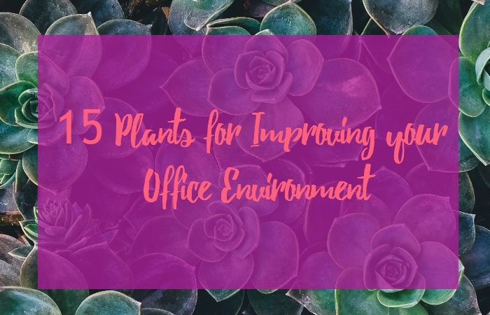 15 plants for improving office environment
